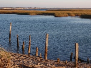 Marsh and lighthouse, Provincetown, Mass.