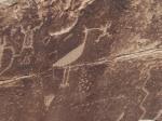 Petroglyph, Petrified National Forest, Arizona.