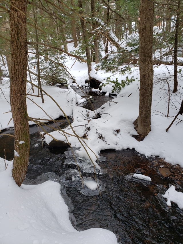 Stream and trees in snow
