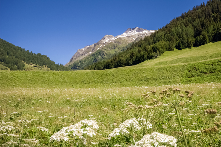 Meadow in foreground, hills behind, clear blue sky